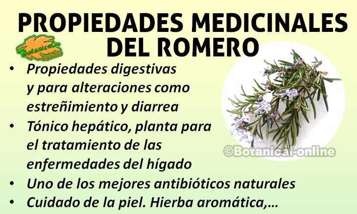 Como superar la depresi n vision global juarez cd for Manzanilla planta medicinal para que sirve